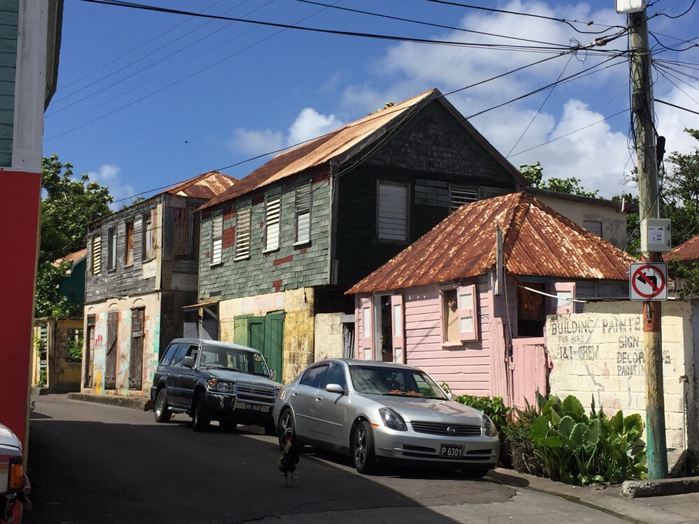 Take a Walk on the Wild Side – Basseterre St. Kitts